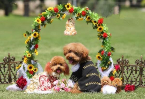想跟狗一样幸福(图很多)-希望种子