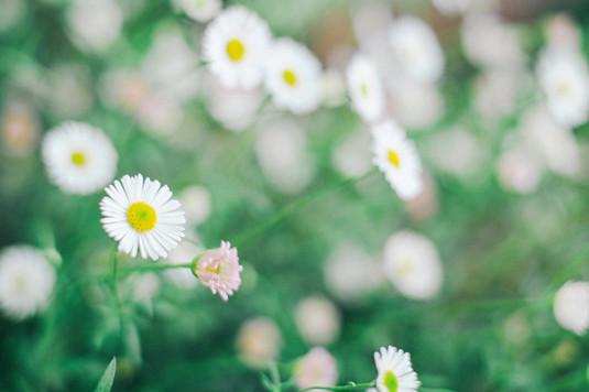 那些清新淡雅的花儿-希望zz