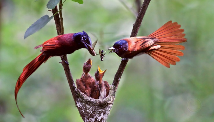 鸟常见的一些急救的方法
