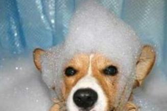 狗狗洗澡选对时机很重要