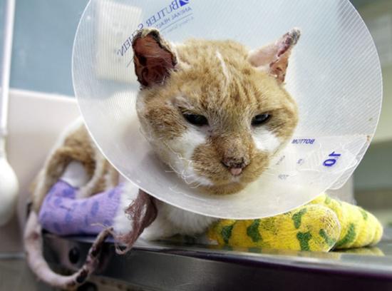 宠物遭遇烧伤、外伤时该怎么办?