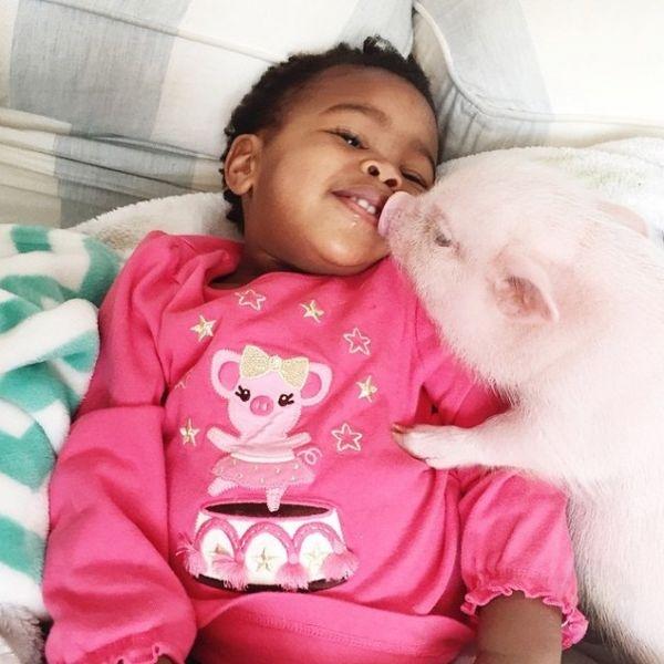 2岁小女孩和宠物小猪的友谊-希望zz