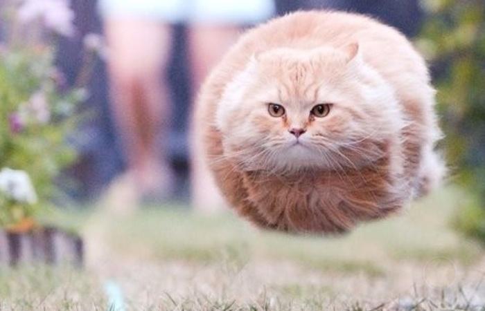 猫咪减肥的正确姿势-希望种子