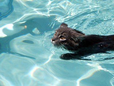 如何让猫咪不怕水?