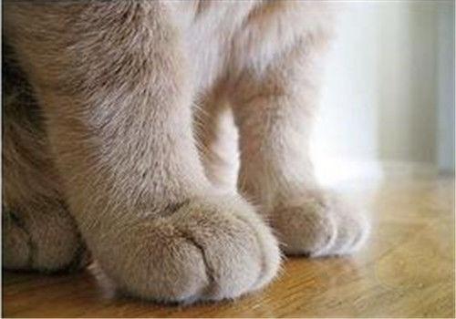 猫咪老是抓人怎么办?什么原因?如何纠正?