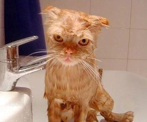 猫咪怕洗澡 主人如何顺利进行?