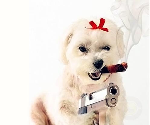 二手烟对狗狗的害处有多大?-希望zz