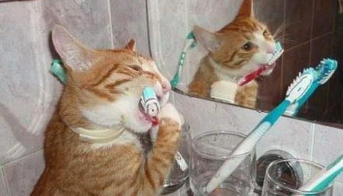 猫咪该如何刷牙